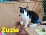 Poznań - potrzebny dom dla 7 kotów
