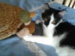 Dom dla kotków potrzebny od zaraz