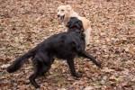 Klara i Bella 1 marca tracą dom tymczasowy!