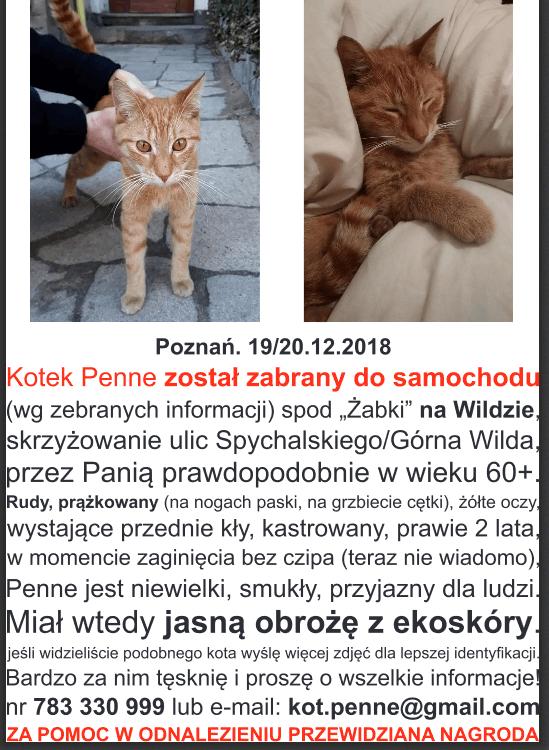 Kot wciąż poszukiwany