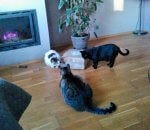 Koty z Kościelnej