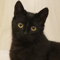 Ryjek, czarny kot do adopcji, Poznań