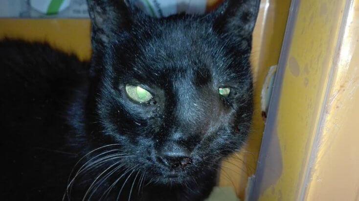 Kolejna kotka w tragicznym stanie pod naszą opieką - Szama