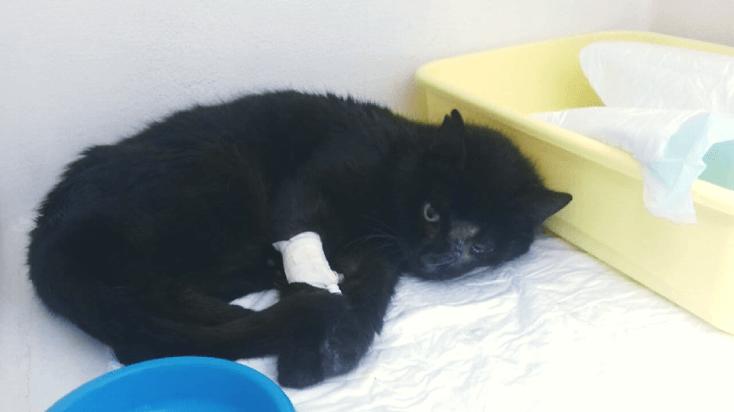 SZAMA nadal mieszka w szpitalu