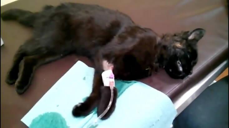 Pamiętajcie, tabletki dla psa nie są dobre dla kota...